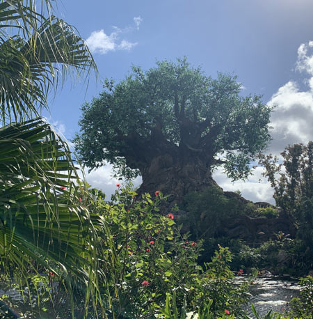 Upcoming Animal Kingdom After Hours Events at Walt Disney World Resort | Mouse Memos Disney Blog
