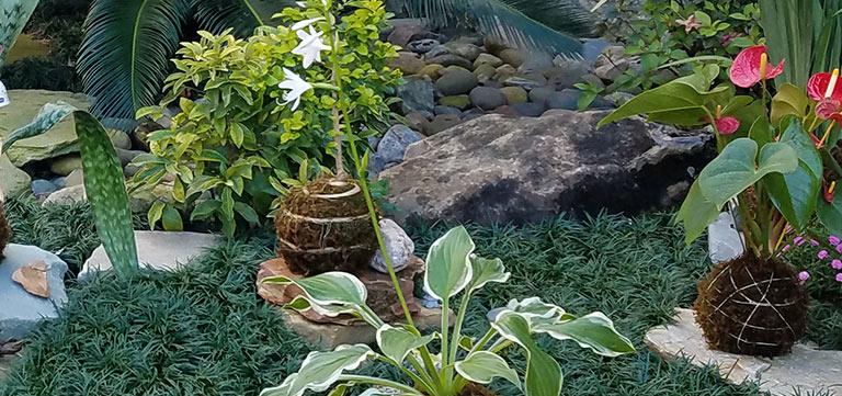 Kokedama Garden at Epcot Flower & Garden Festival   Mouse Memos Disney Blog