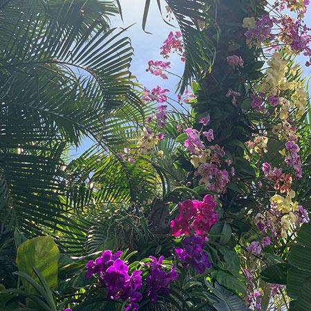 Exploring The Gardens At Epcot Flower Garden Festival Mouse Memos
